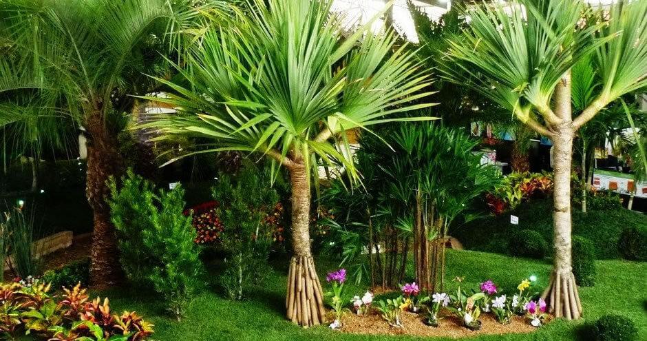 10 plantas que vão purificar o seu ar e o seu lar